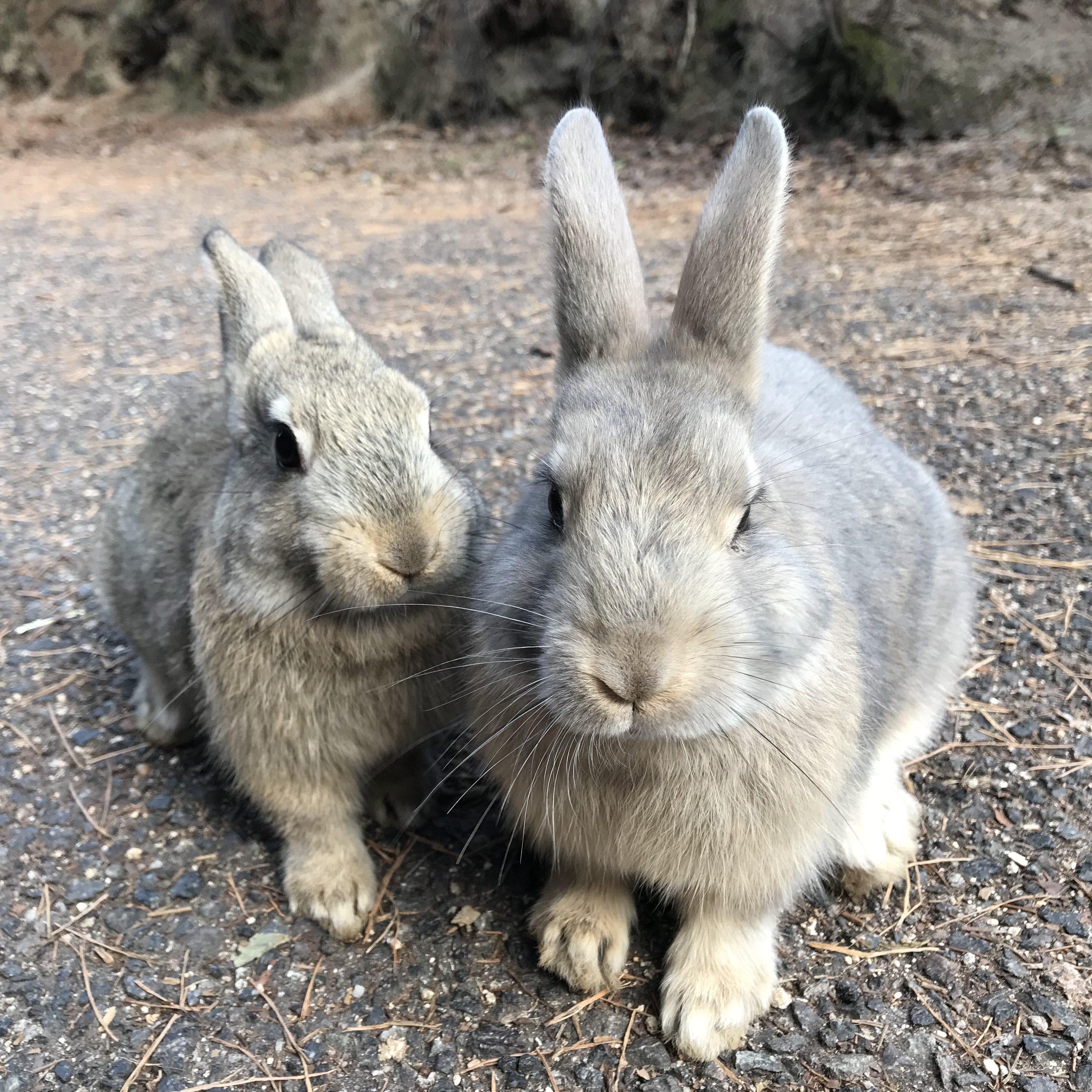 Kaninchen-Insel
